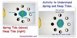 Ocean Activities  The Moon And Tides  Spring And Neap