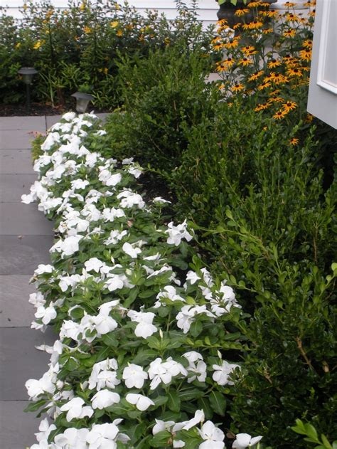 front walkway  vinca boxwood  coreopsis garden