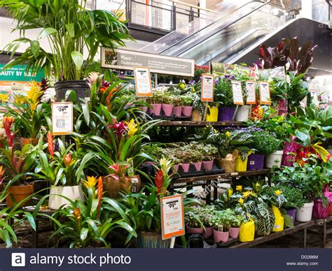 home depot store garden center display nyc stock photo