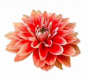 Blumen Bewässern Mit Wollfaden : trauerkerzen und blumen f r jessica moser online anz nden ~ Lizthompson.info Haus und Dekorationen