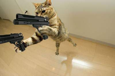 pictures cat with gun picture