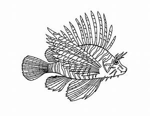 Images Of Lionfish Coloring Page