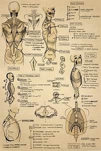 Anatomy Sketchbook On Behance