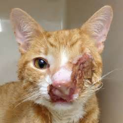 Cat Man Do - Dr. Arnold Plotnick: Cryptococcosis in Cats Cats, Infections from