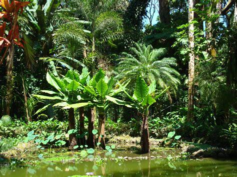 hawaii tropical botanical garden top 28 hawaii botanical gardens hawaii tropical botanical garden mowryjournal com