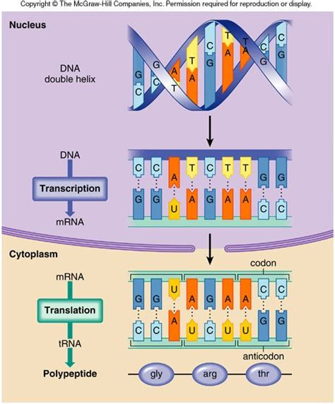 277 Best Biology  Dna, Rna & Protein Synthesis Images On Pinterest  Physical Science, Life