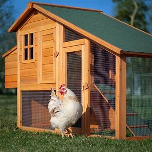 For Chicken Coop
