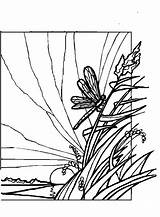 Coloring Pages Dragonflies Drawing Butterfly Dragonfly Habitat Line Previus sketch template