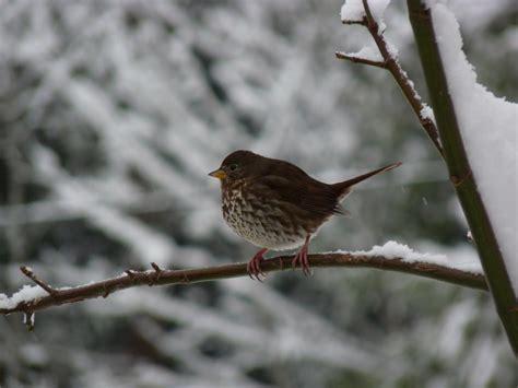 sparrows sparrows everywhere bird canada