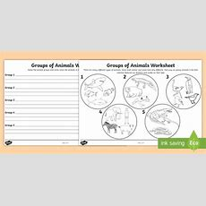 Animal Groups Worksheet  Animals, Living Things, Classifying