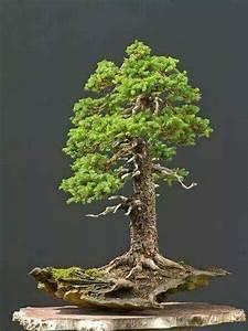 Bonsai Baum Garten : 4681 besten bonsai b ume bilder auf pinterest bonsai ~ Lizthompson.info Haus und Dekorationen