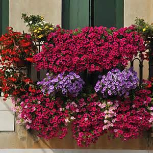 Pflanzen Für Balkon by Balkonpflanzen D 252 Ngen Pflanzen Auf Dem Balkon D 252 Ngen