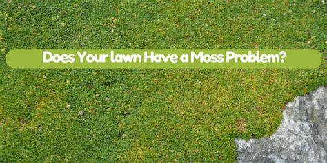 Does Your Lawn Have A Moss Problem?