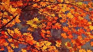 Fall Leaves Background • dodskypict