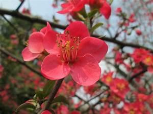 Bulbes D été : planter des bulbes d 39 t nouvelles les pieds dans l 39 herbe ~ Melissatoandfro.com Idées de Décoration
