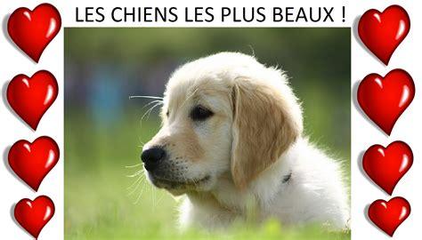 les chiens les plus beaux du monde