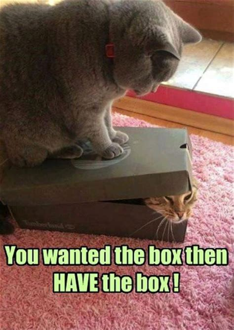 wordless wednesday funny cat memes ww moms  words