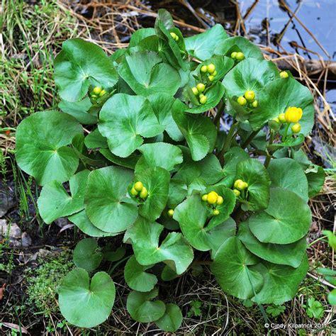 poisonous plants poisonous plants the nature of the hills