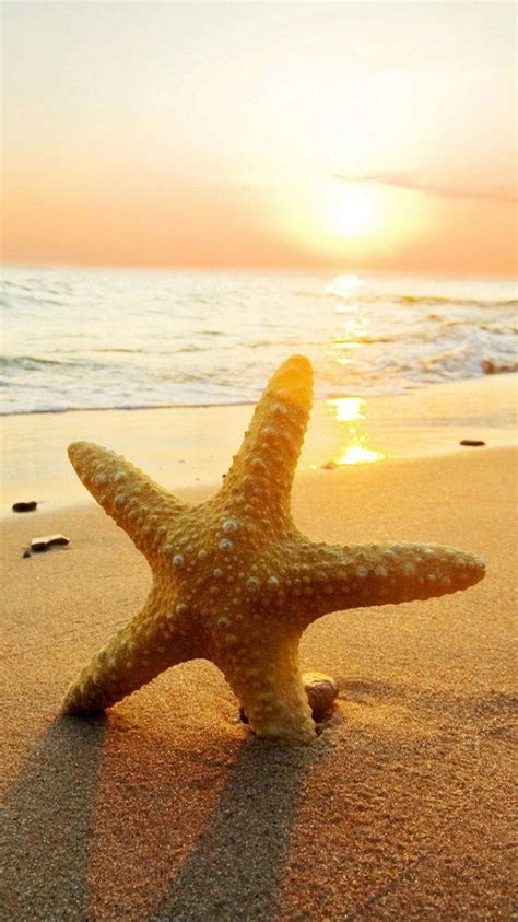 beach starfish wallpaper  mobile   wallpaper hd