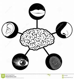 Five Senses Icons Controlled By Brain Stock Vector ...