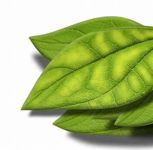 Stockrosen Blätter Haben Löcher : mangelerscheinungen aqua rebell ~ Lizthompson.info Haus und Dekorationen