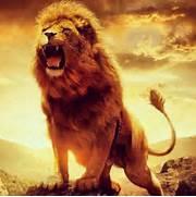 Tumblr Lion Swa...