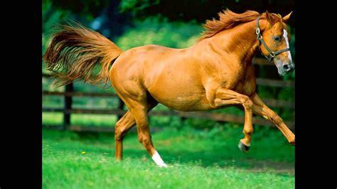 healthy horses characteristics