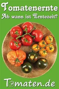 Wann Ist Kürbis Reif : wann sind tomaten wirklich reif zum ernten wir zeigen worauf man achten sollte um wirklich ~ Watch28wear.com Haus und Dekorationen
