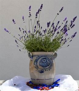 images gratuites plante fleur violet pot ceramique With chambre bébé design avec bouquet de fleurs noires
