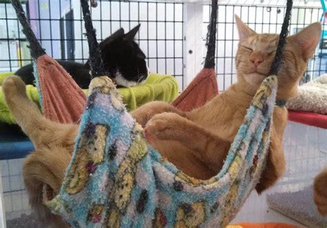 Kitten In A Hammock by Tip Of The Week Make A Hammock Aspcapro