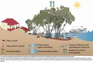 Protecting Coastal Habitats Helps Mitigate Climate Change