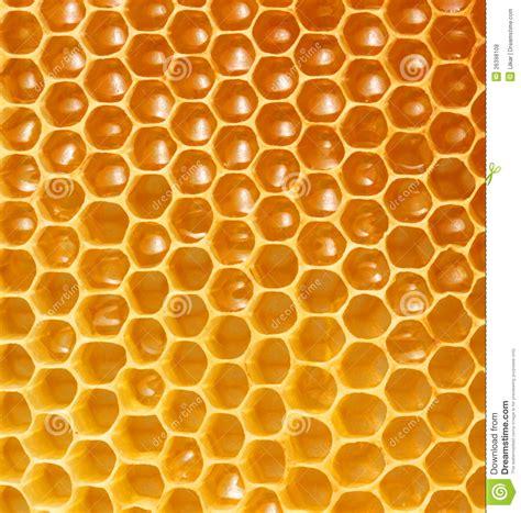 honeycomb background stock photo image of lifestyle