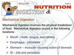 Mechanical  U0026 Chemical Digestion