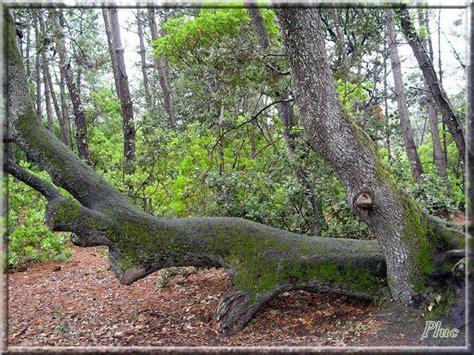 bancs du vieil du bois de la chaize noirmoutier en l 238 le