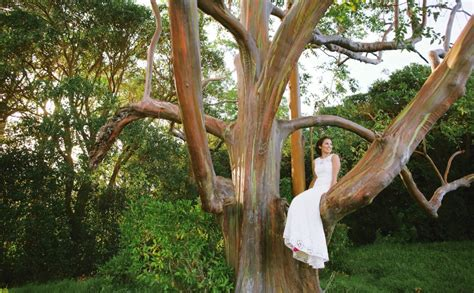 wedding   rainbow eucalyptus forest maui wedding