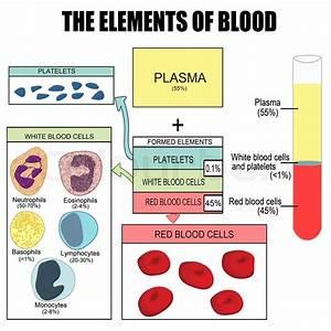 De Elementer Af Blod