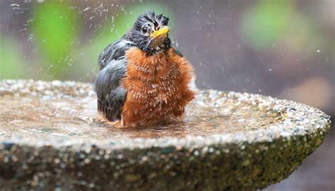 20 quot bird bath dish with drip or mist wild birds