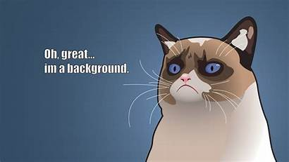 Cat Meme Funny Grumpy Cats Humor Wallpapers