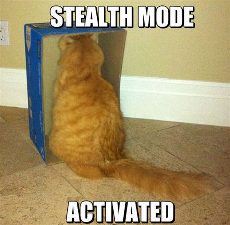 cat memes stealth cats mode metal masters internet funny optional pets source kojima hideo solid comes freeaddon