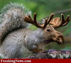 Incredibly Smal... Elk Animal Quotes
