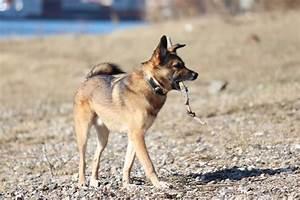 Ich Suche Einen Großen Hund : startseite mein ~ Jslefanu.com Haus und Dekorationen