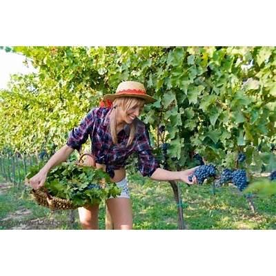 HarvestSMART about wine