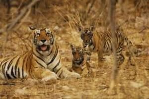 wildlife conservation efforts in india essay