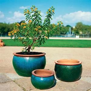 Pflanztopf Für Palmen : shopthewall fototapete am strand kt448 gre 400x280cm ~ Lizthompson.info Haus und Dekorationen