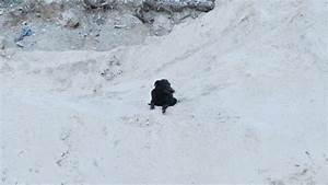 Ich Suche Einen Großen Hund : ich habe einen hund ausgesetzt kitmir tierhilfe ~ Jslefanu.com Haus und Dekorationen