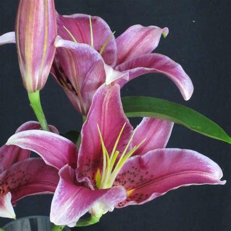 flowers in season flowers in season december bridalguide