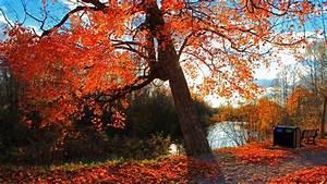 Full HD Wallpaper autumn forest tree river, Desktop ...