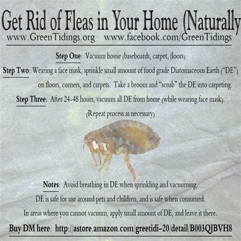 how to rid fleas in house get rid of fleas in your home naturally www fb