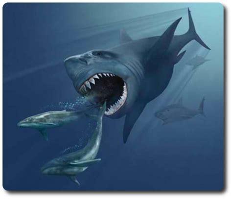 learn   evolution  sharks   world shark sider