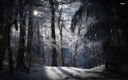 Snowy Forest Dark Sunny Wallpapers Background